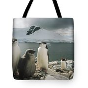 Chinstrap Penguins With Chick Paradise Tote Bag