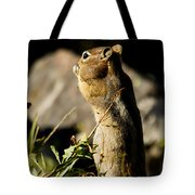 Chipmunk   #9594 Tote Bag