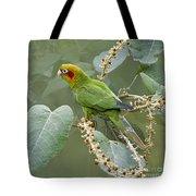 Chiriqui Conure 2 - Dp Tote Bag