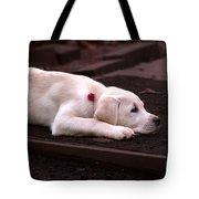 Chocolate Dreams Tote Bag