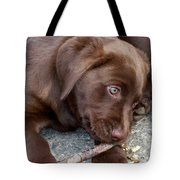 Chocolate Lab Pup Tote Bag