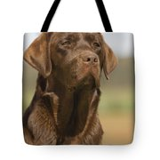 Chocolate Labrador Dog Tote Bag