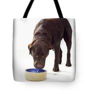Chocolate Labrador Drinking Tote Bag