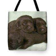 Chocolate Labrador Puppies Tote Bag