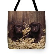 Chocolate Labrador Puppies Tote Bag