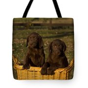 Chocolate Labrador Retriever Pups Tote Bag