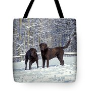 Chocolate Labrador Retrievers Tote Bag