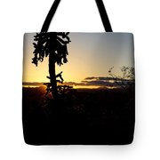 Cholla Cactus Sunset Tote Bag