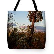 Cholla Cactus View Tote Bag