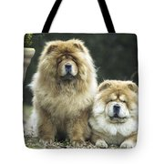 Chow Chow Dogs Tote Bag