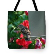 Chow Time At The Bird Feeder Tote Bag