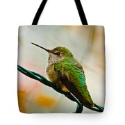 Christmas Humming Bird Tote Bag