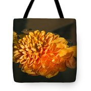 Chrysanthemum Gently Floating In The Fountain Of Campo De Fiori - Rome - Italy Tote Bag