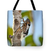 Cicada On Fig Tree Tote Bag