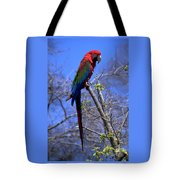 Cincy Parrot Tote Bag
