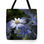 Cineraria  1217 Tote Bag by Terri Winkler