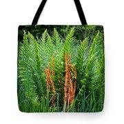 Cinnamon Fern Tote Bag