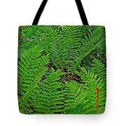 Cinnamon Ferns Along Skyline Trail In Cape Breton Highlands Np-n Tote Bag