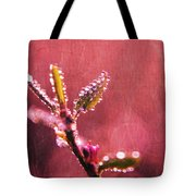 Circles From Nature - C33st04a Tote Bag