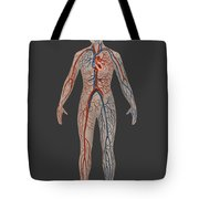 Circulatory System In Female Anatomy Tote Bag