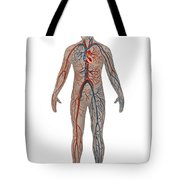 Circulatory System In Male Anatomy Tote Bag