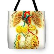 Circulatory System Tote Bag