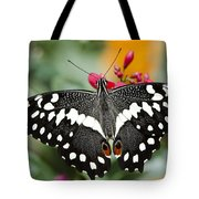 Citrus Swallowtail Butterfly  Tote Bag