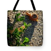 City Snail From Above Tote Bag