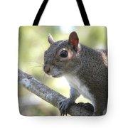 City Squirrel On The Hunt Tote Bag by Belinda Lee