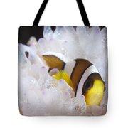 Clarks Anemonefish In White Anemone Tote Bag