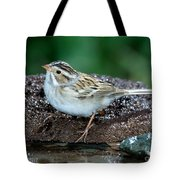 Clay-colored Sparrow Spizella Pallida Tote Bag