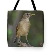 Clay-colored Thrush Tote Bag