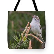 Clay-coloured Sparrow Pictures 35 Tote Bag