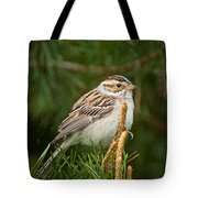 Clay-coloured Sparrow Pictures 50 Tote Bag