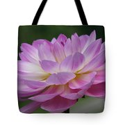 Clearly Gorgeous Tote Bag