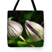 Clematis Buds Tote Bag