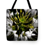 Cleome In Bloom Tote Bag