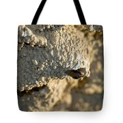Cliff Swallow About To Fledge Tote Bag