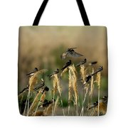 Cliff Swallows Perched On Grasses Tote Bag