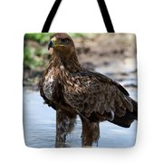 Close-up Of A Tawny Eagle Aquila Rapax Tote Bag