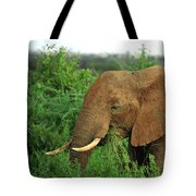 Close Up Of African Elephant Tote Bag