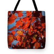 Close Up Of Bright Red Leaves With Blue Tote Bag