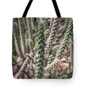 Close Up Of Long Cactus With Long Thorns  Tote Bag