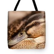 Close Up Shot Of Female Mallard Duck Tote Bag
