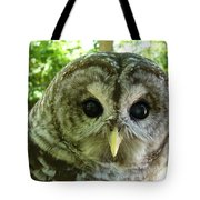 Closeup Of A Barred Owl Tote Bag