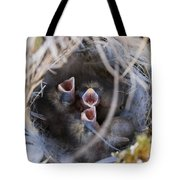 Closeup Of Lapland Longspur Chicks In Tote Bag by Scott Dickerson