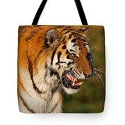 Closeup Portrait Of A Siberian Tiger  Tote Bag