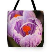 Closeup Striped Purple Crocus Vernus Tote Bag