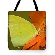 Cloudless Sulphur Butterfly Tote Bag
