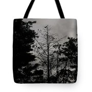 Clouds And Trees Tote Bag